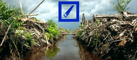Indonésie : la Deutsche Bank finance la déforestation