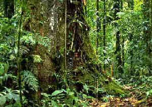 Quand la forêt amazonienne va-t-elle disparaitre ? Dans 100... ou 50 ans ? (Photo : Department of Environmental Science and Policy, University of