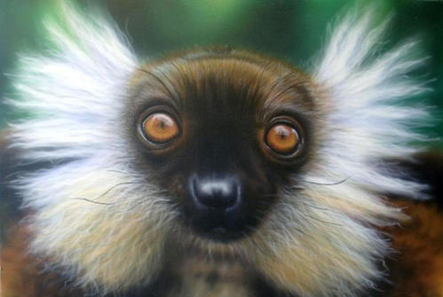 A lemur endangered in Madagascar